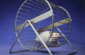 rat-treadmill