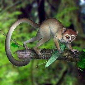 china primate