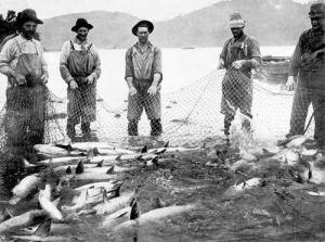 handling-salmon